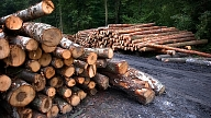 У лесной отрасли - очередной рекордный год