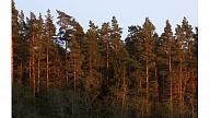 """Significant growth of Latvian """"green gold""""  branch"""