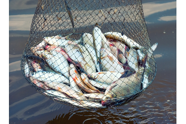 "Fisheries industry going through a ""restart"""