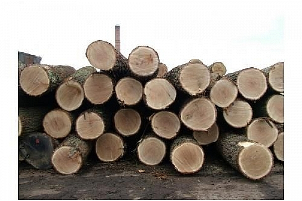 Forest industry faces new challenges