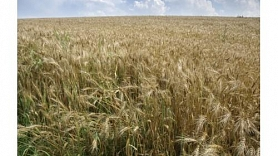 Agriculture and food export growth– 29,3%
