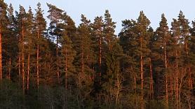 Latvijas eksporta galvenais balsts
