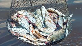 """Рыбная промышленность переживает """"рестарт"""""""